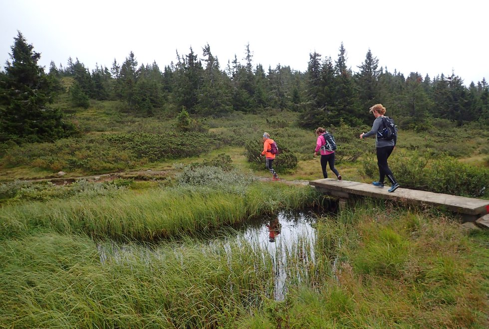F.v.: Yngvild Schwung Nilsen, Alice Steinkellner og Laila Tjelmeland på løpesamling for Kondis på Ilsetra august 2020