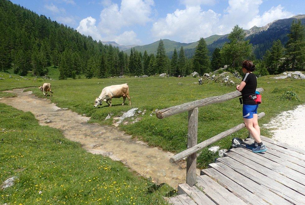 På Kondistur fra Passo Rolle til Passo di Valles i Dolomittene i Italia