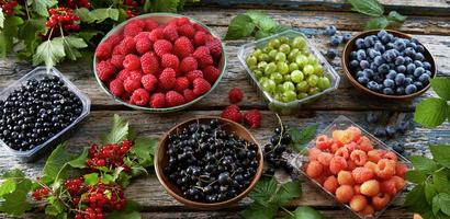 Blåbær, bringebær, stikkelsbær, solbær på treunderlag - miljø