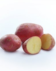 Potetsorten Nansen