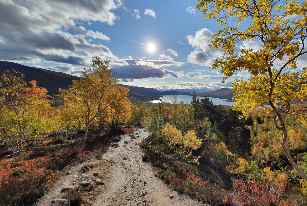 Fra fjellområdene i Trollheimen og Oppdal